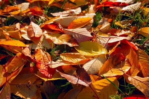 Lawn Care Services Chelmsford - Autumn Lawn Care