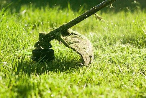 Long Grass Strimmed