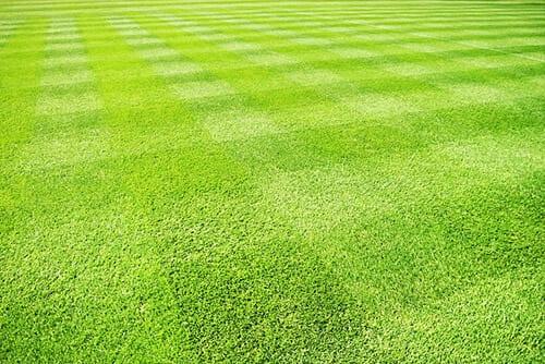 Beautiful Stripy Lawn