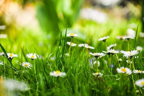 Lawn Care Services Chelmsford - Spring Lawn Care